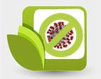 Хранителни добавки, които могат да помогнат на имунната система да се пребори с коронавируса