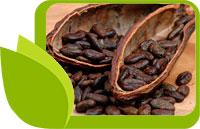 Божественото Какао или зърната от Градината на Боговете
