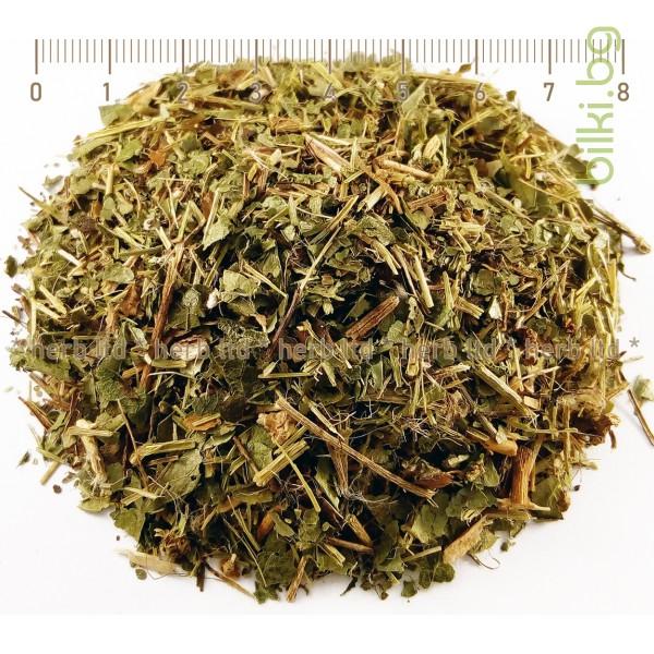 зимзелен билка