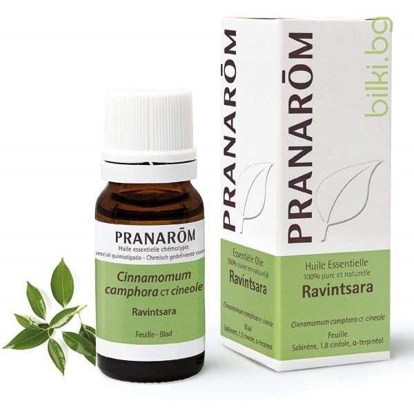 био етерично масло от равенсара листа, пранаром, ревинтсара, Cinnamomum camphora, pranarom