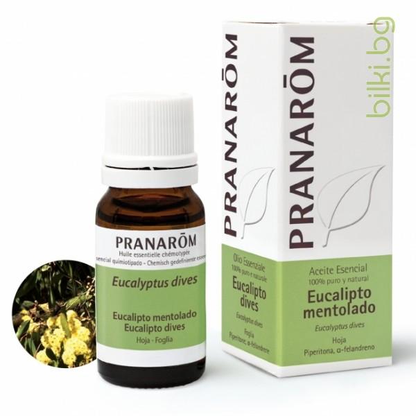 био масло евкалипт ментол, пиперитон, пранаром, Eucalyptus dives piperitone, pranarom
