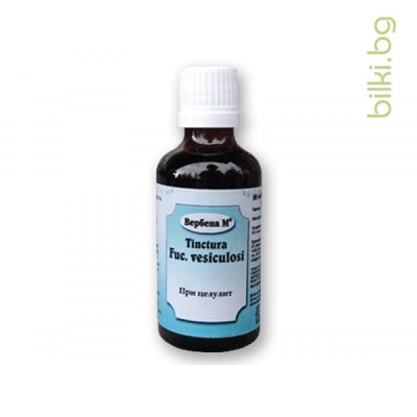 тинктура от мехурчесто водорасло