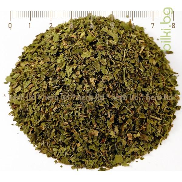 магданоз лист билка