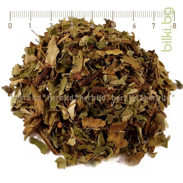 Pulmonaria officinalis herba