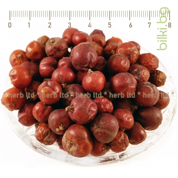 хвойна червена билка, червена хвойна лечебни свойства,