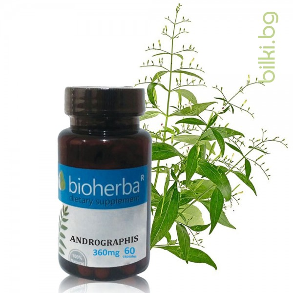 андрографис, биохерба, andrographis, paniculata, bioherba