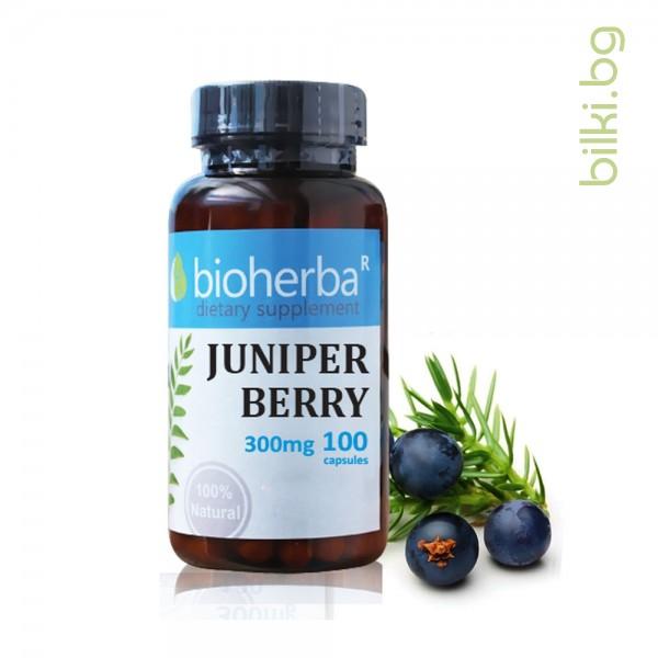 хвойна, синя, хвойн плод, биохерба, пикочна система