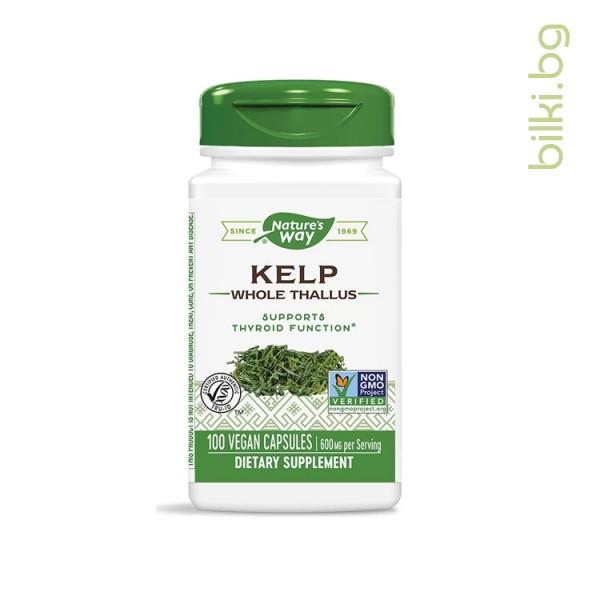 келп,кафяви водорасли,nature's way, капсули,антиоксидант,