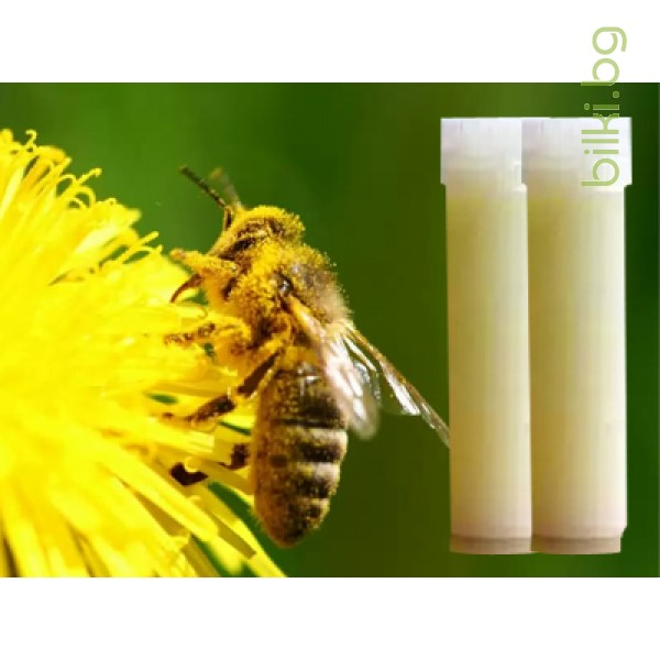 пчелно млечице, пчелно млечице цена, пчелно мляко