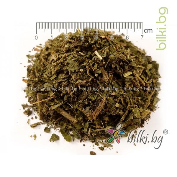 коприва лист билка