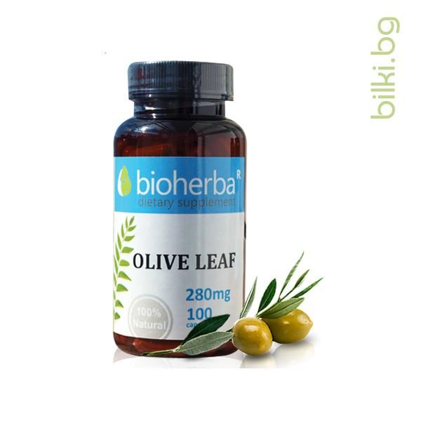 маслина лист