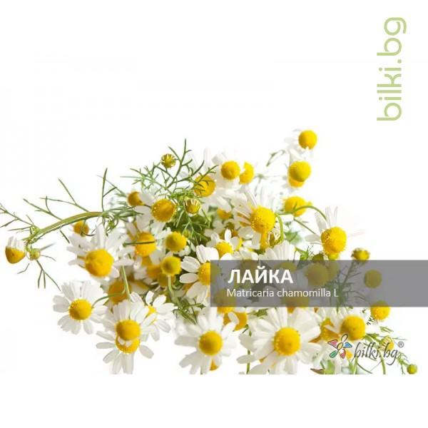 лайка само цвят, matricaria chamomilla l