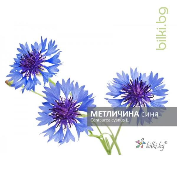 метличина синя, centaurea cyanus l.