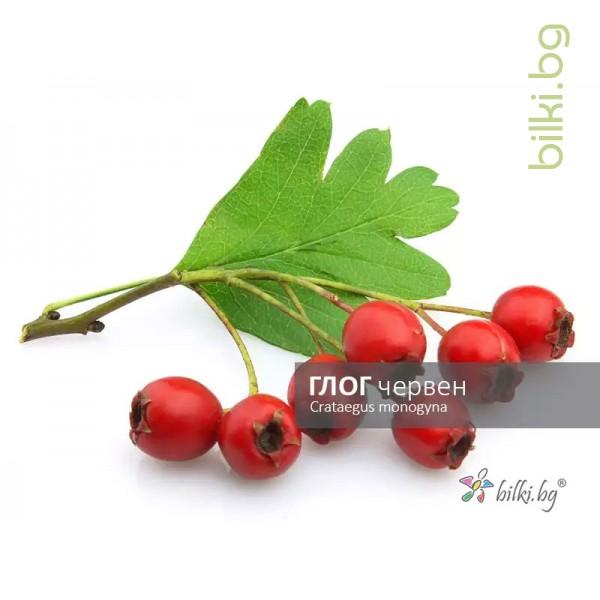 глог червен, crataegus monogyna