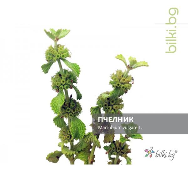 пчелник, marrubium vulgare l.