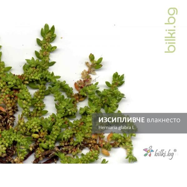изсипливче влакнесто, herniaria glabra l