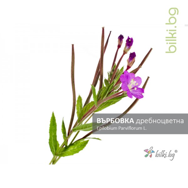 върбовка дребноцветна, epilobium parviflorum l.