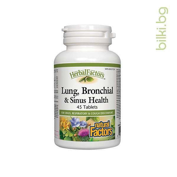 lung, bronchial, sinus, health, бял дроб, бронхи