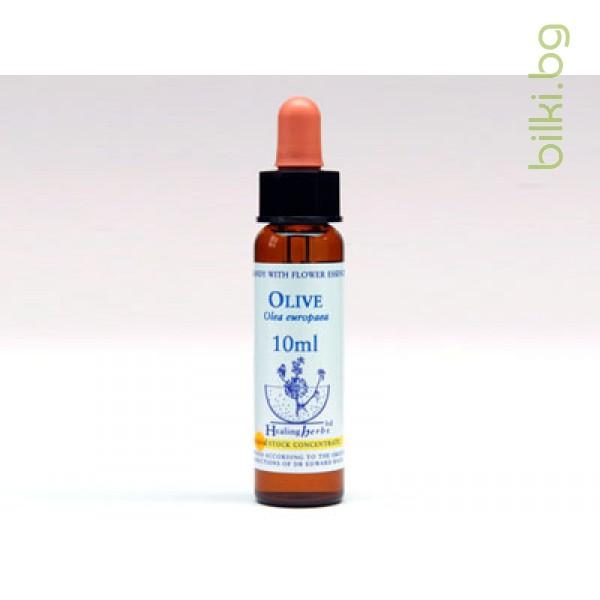 Цветни капки на Бах за недостатъчен интерес към настоящето, Olive, Маслина, 10мл