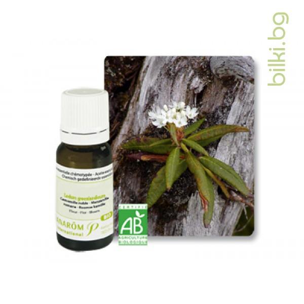 био етерично масло от рододендрон, азалия, пранаром