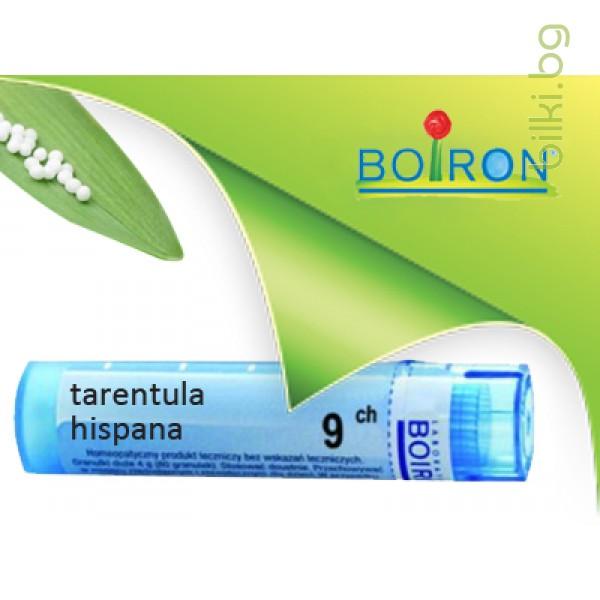 tarentula hispana, boiron