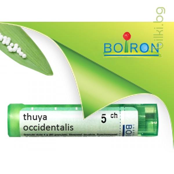 thuya occidentalis, boiron