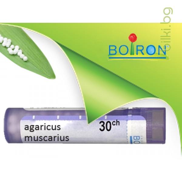 agaricus muscarius, boiron
