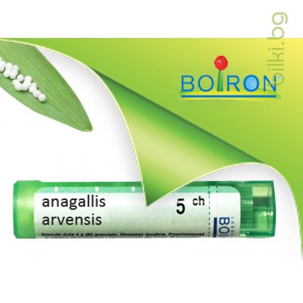 anagallis arvensis, boiron