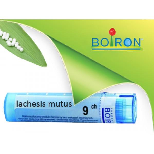 lachesis mutus, boiron