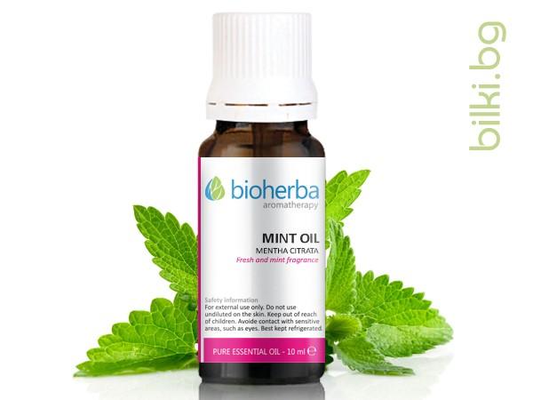 масло от мента, цитратна, мента, mentha citrata leaf