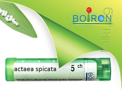actaea spicata, boiron
