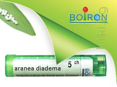 aranea diadema, boiron