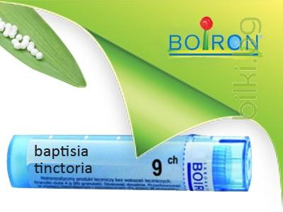 baptisia tinctoria,boiron
