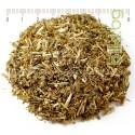 ПЕЛИН, КАТРАНИКА СТРЪК НАСИПНО, Artemisia vulgaris, при паразити