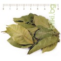 Дафинов лист, Лавров лист, Лавър лист, Laurus nobilis