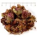 ЧЕРВЕНА ДЕТЕЛИНА ЦВЯТ , Trifolium pratense L.