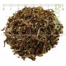 ТЕСНОЛИСТ ЖИЛОВЛЕК , ЖИВОВЛЕК ЛИСТ , Plantago lanceolata L
