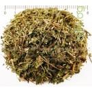 Билка Зимзелен , Зим зелен дребен, Малка винка , стрък , Vinca minor L.