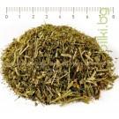 ШАПИЧЕ , ЦАРИЧЕ СТРЪК , Alchemilla vulgaris L.
