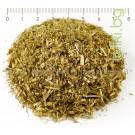 БЯЛ РАВНЕЦ , СТРЪК С ЦВЯТ , Achillea millefolium L.