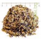 МЕТЛИЧИНА СИНЯ , ЦВЯТ , Centaurea cyanus L.