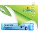 Тарeнтула, TARENTULA HISPANA CH 9, Боарон