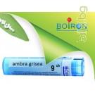 Амбра гризеа, AMBRA GRISEA CH  9, Боарон