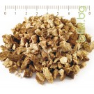 РЕШЕТКА КОРЕН , Carlina acanthifolia All.