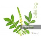 агримония, agrimonia eupatoria l.