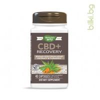cbd recovery, хранителна добавка