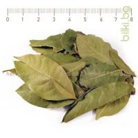 Дафинов лист, Лавров лист, Лавър лист, Laurus nobilis, дафинов лист подправка