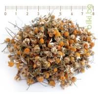 лайка, matricaria chamomilla