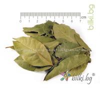 дафинов лист билка