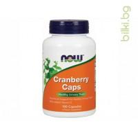екстракт от боровинка,боровинка,боровинков екстракт,cranberry extract